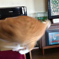 アメブロ更新!猫VSワタクシ。
