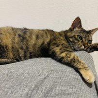 猫スタッフ2のちょっとした癒し。